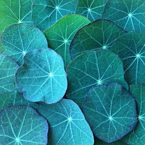 BabyLeaf Nasturtium Leaves