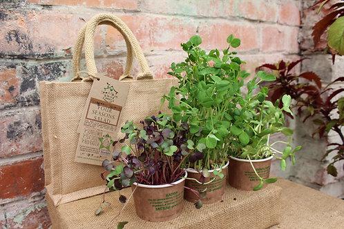 STARTER KIT Gift ~ Four Seasons Salad Mix