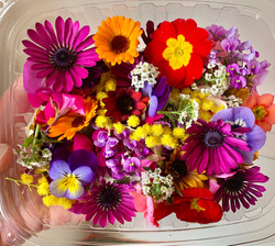 Winter selection edible flowers