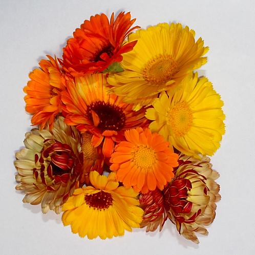 Calendulas- Pot Marigold