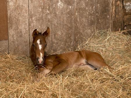 今年6頭目の仔馬が生まれました