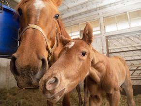 今年3頭目の仔馬が産まれました