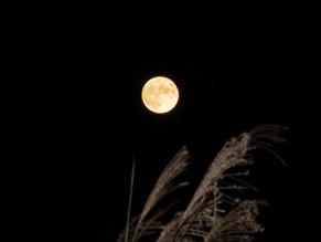 8年ぶりの満月となった中秋の名月を眺める🌕