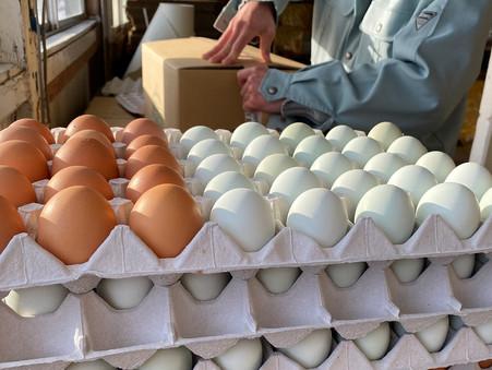 本日、無農薬野菜と平飼い有精卵の出荷日です