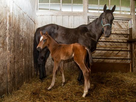 またまた仔馬が産まれました