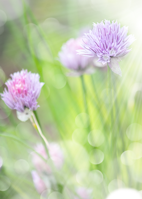 Pollinator atractions
