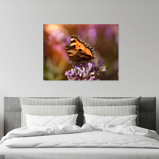 Painted lady at sunset.png