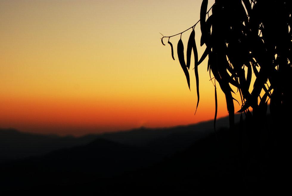 zoopiyi_sunset.jpg