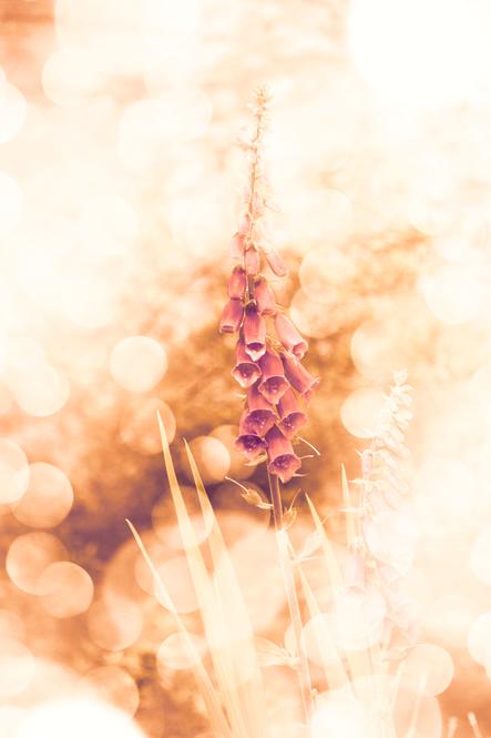 Foxglove flower magic