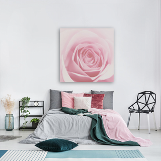Softly pink rose