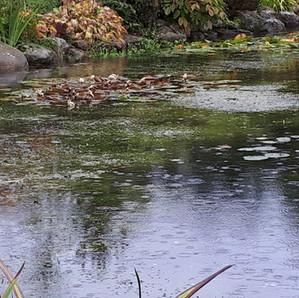 A photograph of Melkinthorpe Pond