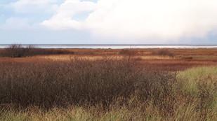 Early Morning Tide  landscape photo 1
