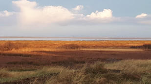 Early Morning Tide  landscape photo 2
