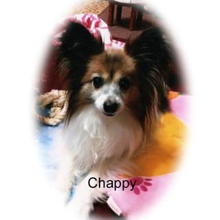 Chappy real revのコピー.jpg