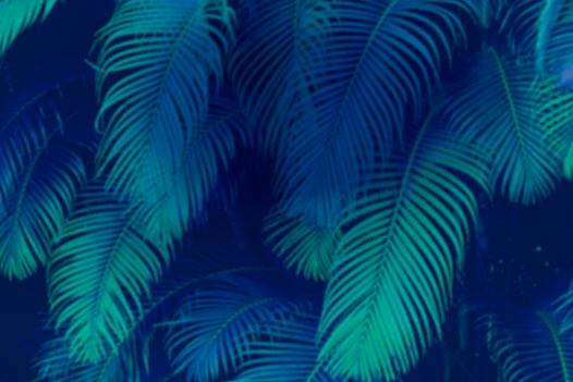 palm_front_web_grainless1-1024x683.png