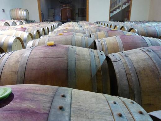 Barrel room in San Antonio winery