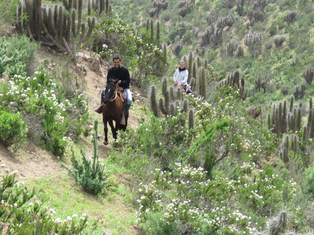 Horseback ride Cactus Route