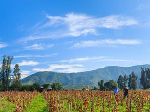 Casa Blanca Valley