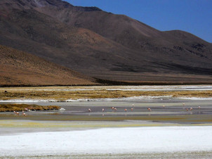 Surire Salt Flat