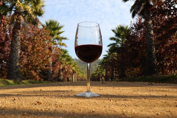 Wine of Casablanca Valley