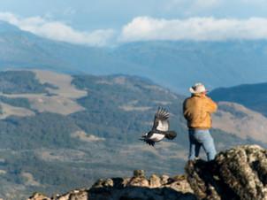 Coyhaique Birds Watching