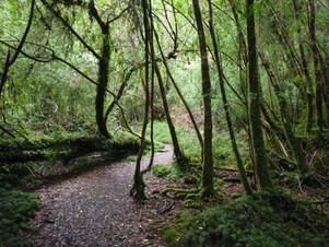 Alerce Andino Park
