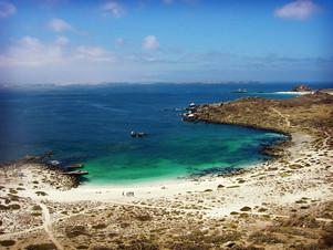 Punta de Choros and Islas Damas