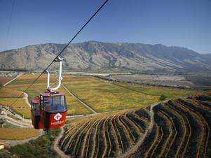 Santa Cruz Vineyard