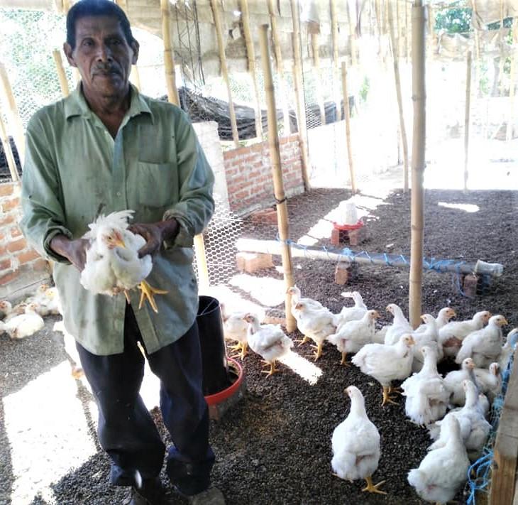 March 2020 Ahuachapan-Metapan chicken pr