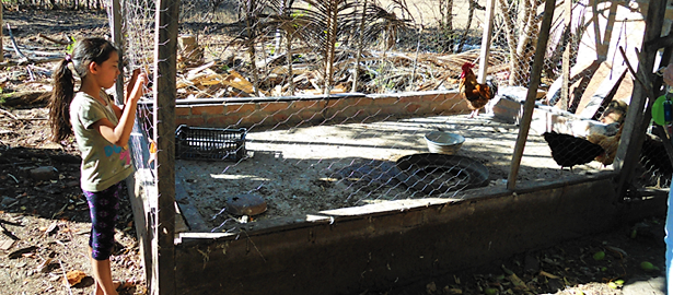 Community Chicken Project