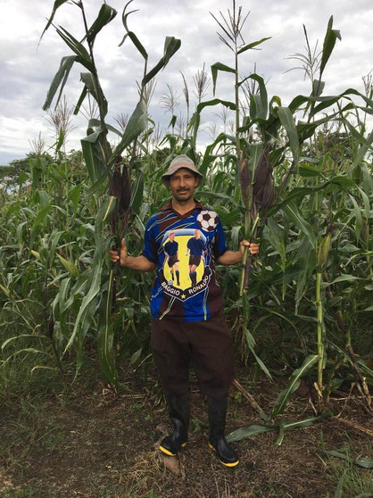 Chepe with his corn crop in August 2020