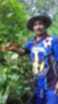 raised_garden2_102019.jpg