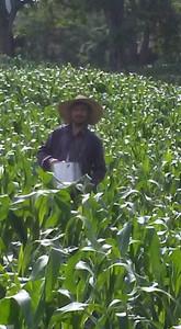 Chepe's cornfield July 2020