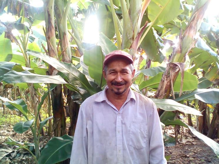 Corn crop in Atecuacia, Ahuachapan Oct 2020