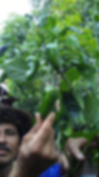 raised_garden4_102019.jpg