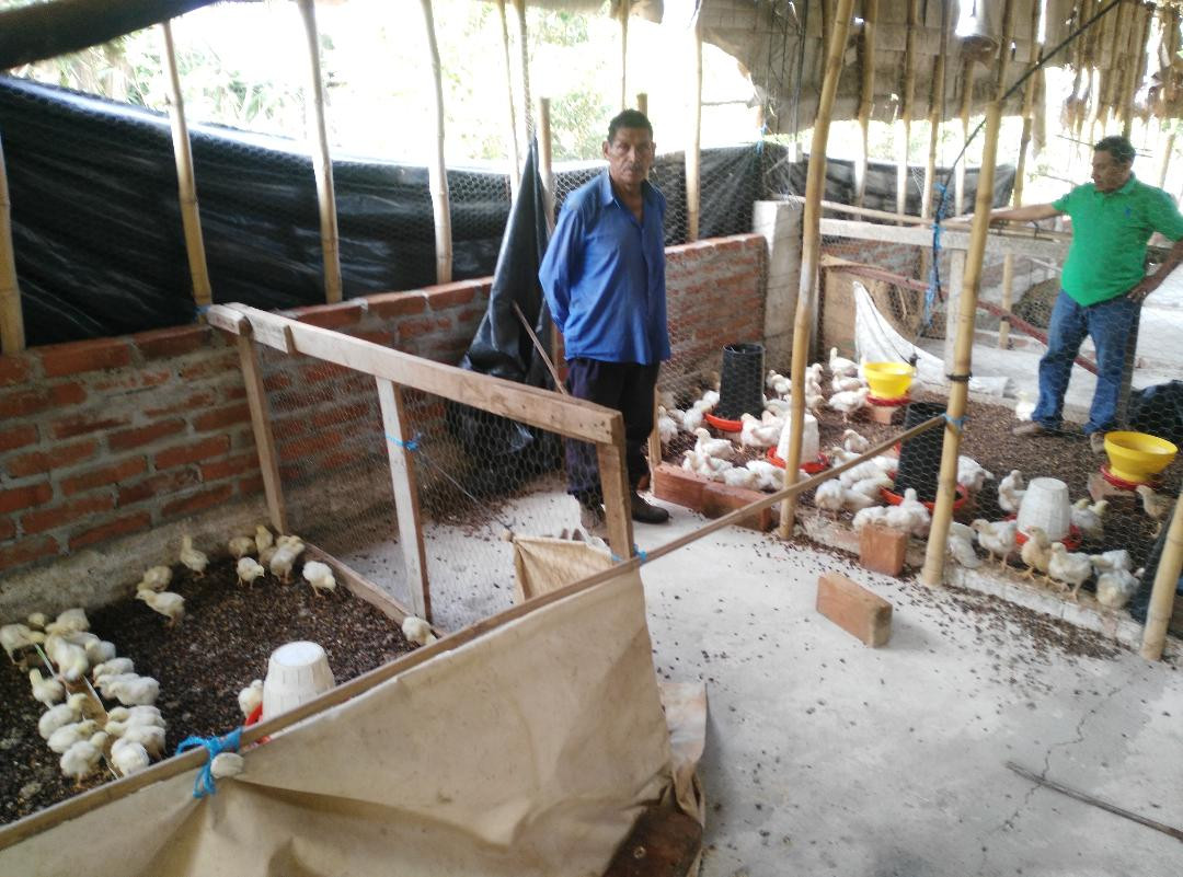 Community Chicken project in Atehuecia