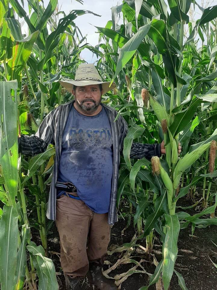 Don Juan's cornfield in San Diego