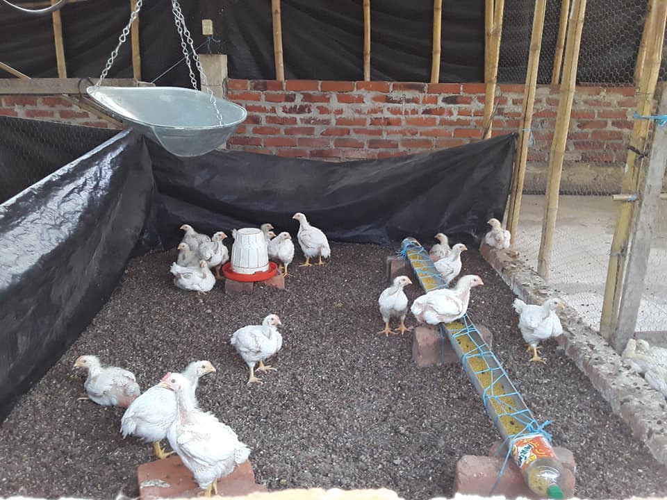 Atehuecia chicken coop
