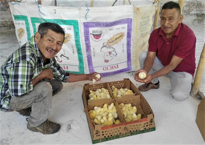 March 2020 Ahuachapan chicken projects