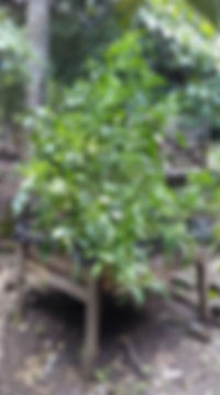 raised_garden1_102019.jpg