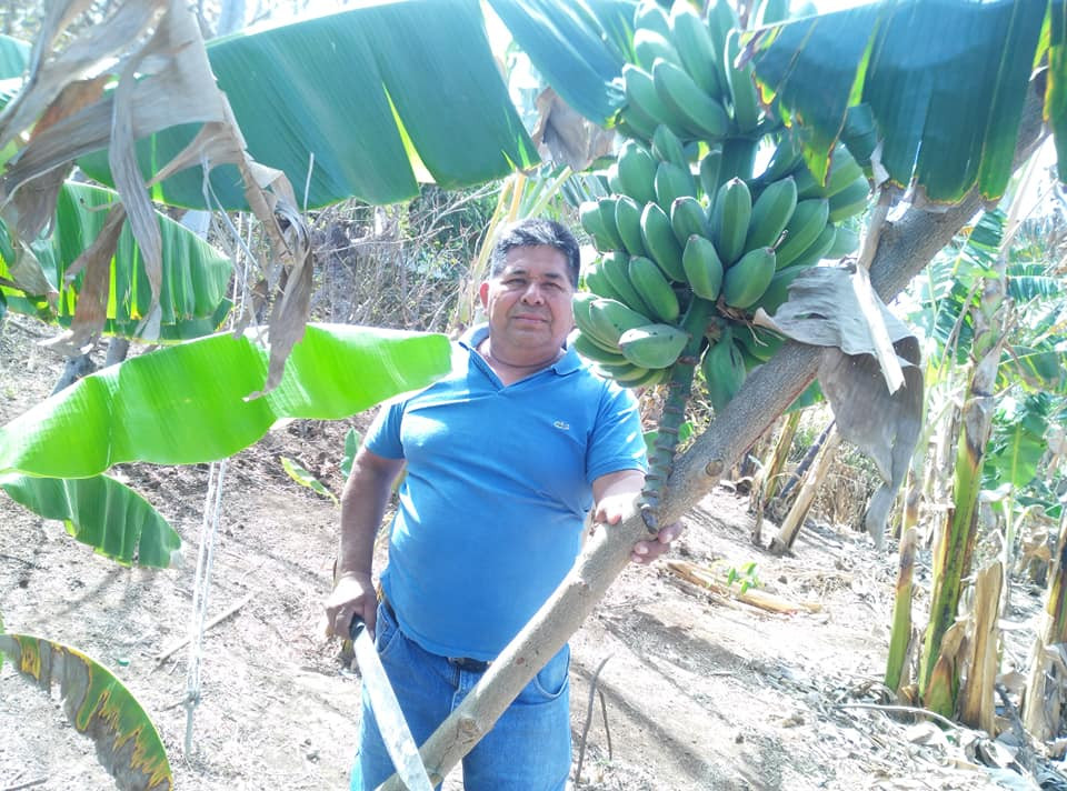 banana trees March 2020