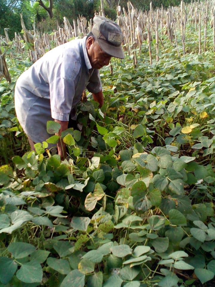Bean farmer in Atecuacia, Ahuachapan Oct 2020