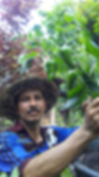 raised_garden3_102019.jpg