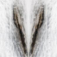 02_L5A5113-33=1sharp 2.jpg
