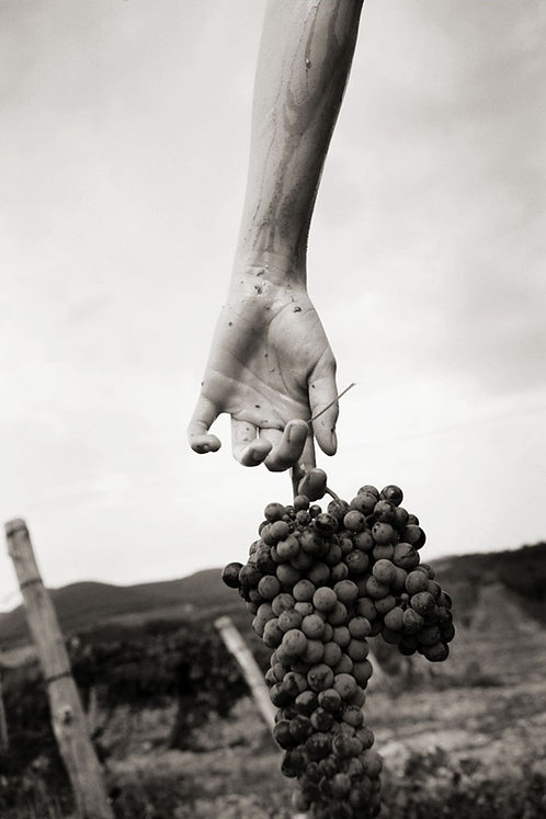 Нand with Grapes. 2006.