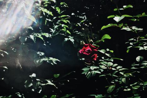Romantic Illusion