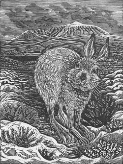 A Hoy Hare