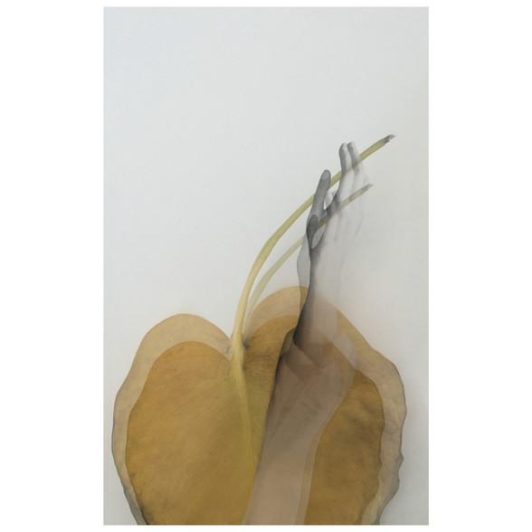 handblattshanelkleinb.jpg