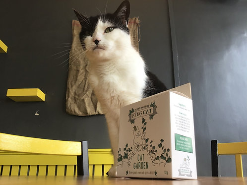 Grow Your Own Cat Grass Kit
