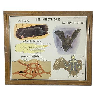 Affiche Les insectivores / Le chien